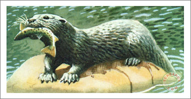 11. The Otter