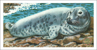 17. The Grey Seal