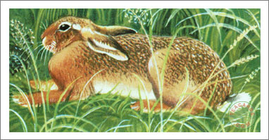 22. The Brown Hare