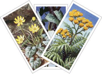 Wild Flowers series 2 cards